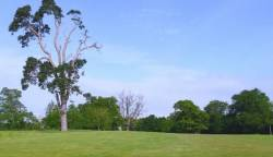 2nd Hole: The Tee